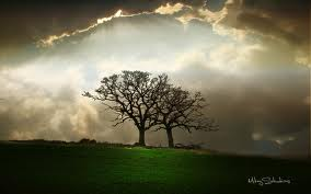 STORM BREWS AND TREE